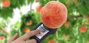 非破壞式糖度計 PAL-HIKARi 測量水蜜桃